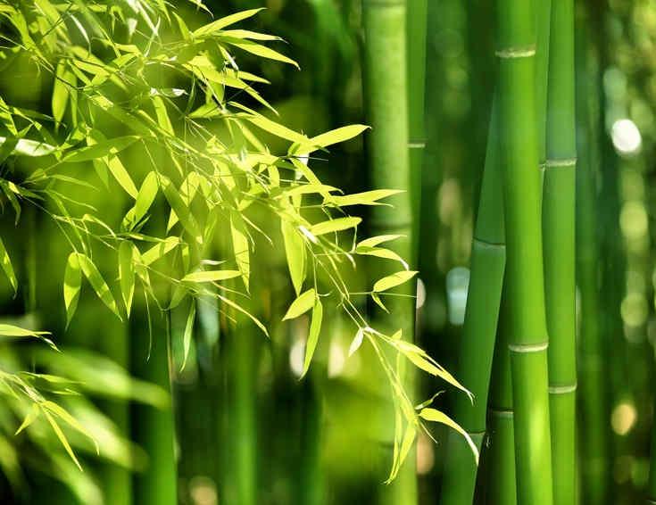 bambou, ideal pour le parquet