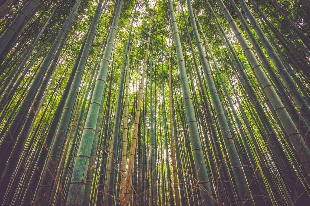 le bambou est écologique